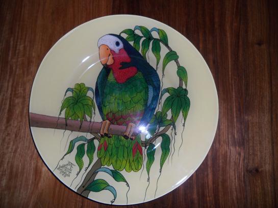 perroquet observant