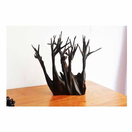 baobab en ébène